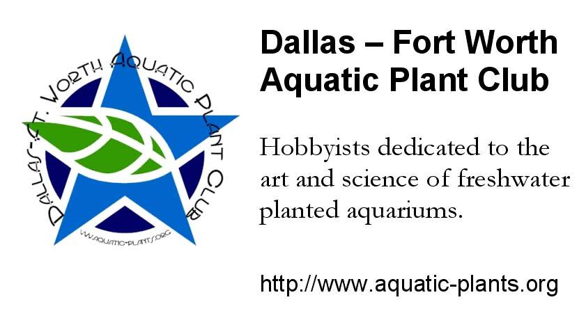 DFWAPC Promo Business Cards Dallas Ft Worth Aquatic